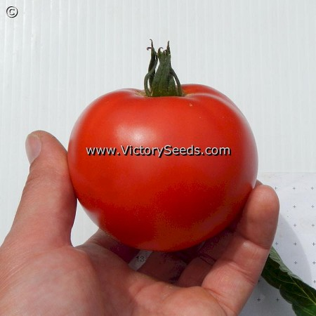 Burpee's Table Talk Tomato
