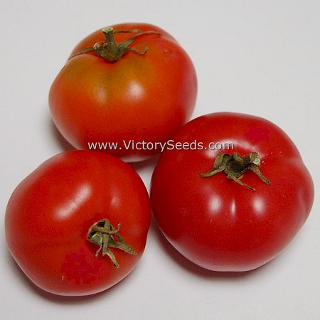 Clare Valley Pink Tomato