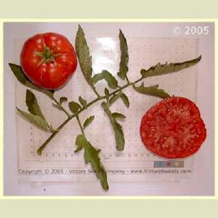 Crimson Cushion Tomato