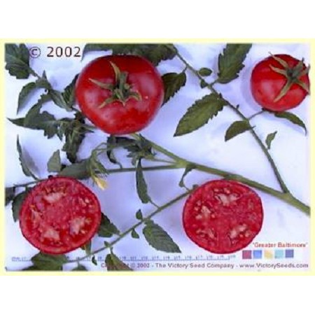 Greater Baltimore Tomato