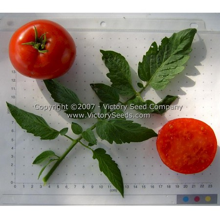 Legend Tomato<br><b>SOLD OUT for 2020</b>