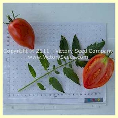 Ludmilla Red Plum Tomato