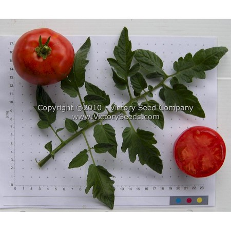 Oregon Spring Tomato<br><b>SOLD OUT until 2022</b>