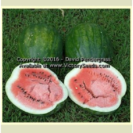 Mountain Sweet Watermelon